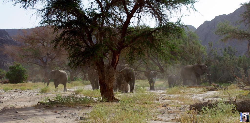 Aïe Aïe Aïe  !!! des élphants et leurs bébés !!! ça craint ...